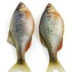 Пятеро рыбаков-браконьеров