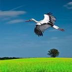 «Пад белымі крыламі»